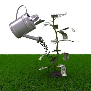 Money plant over white background